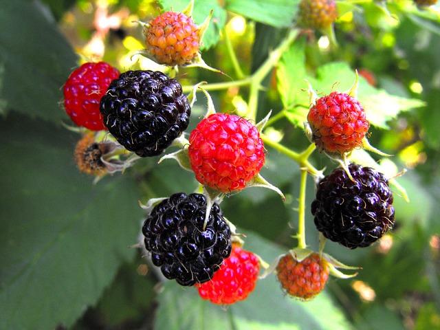 frutti di bosco proprieta