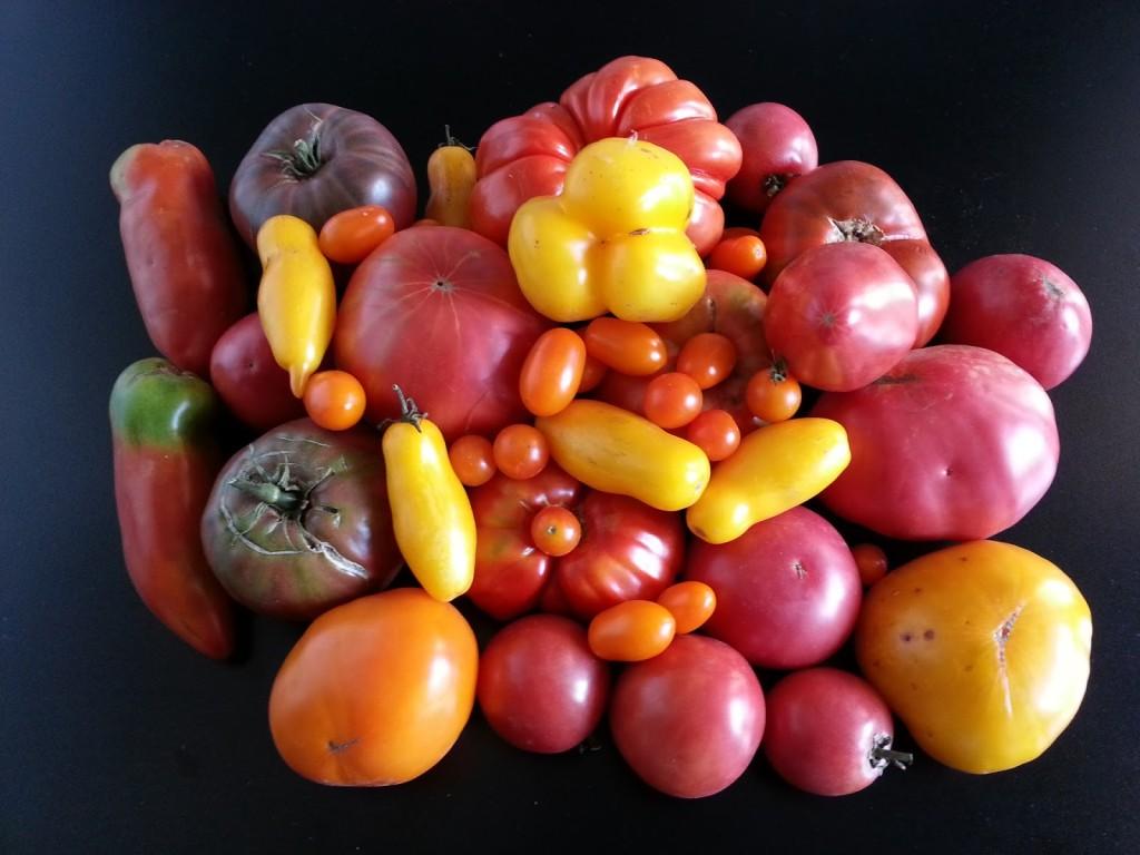 pomodori antichi