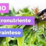 Iodio, il Micronutriente Più Frainteso