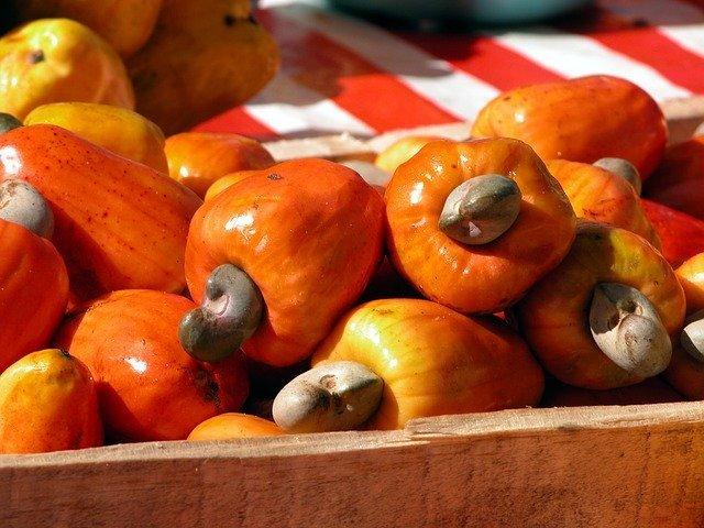 frutto anacardo caju